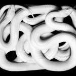 Like the snake